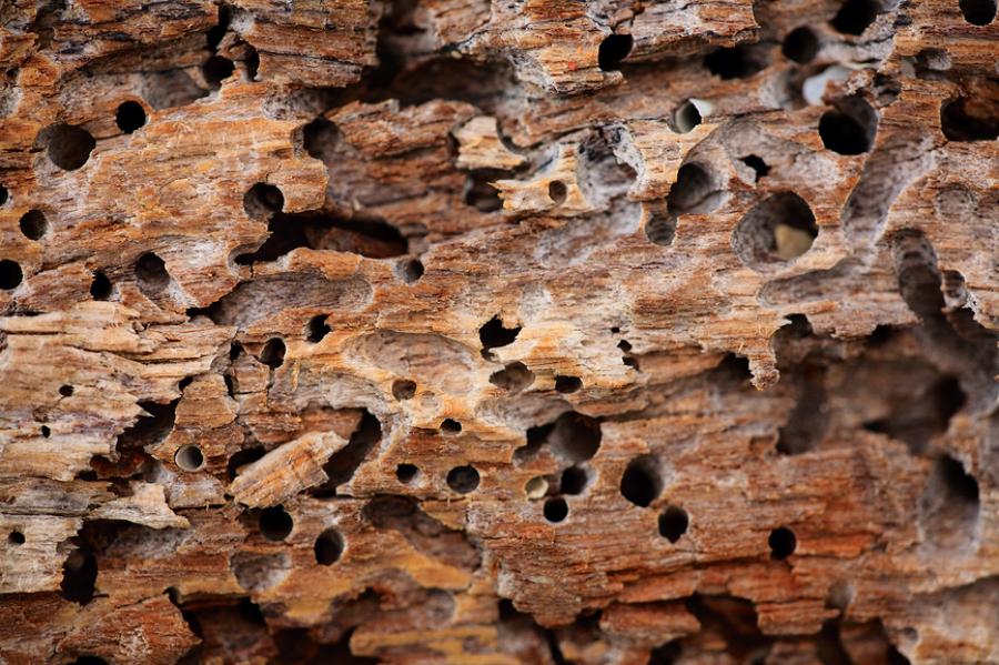 C mo eliminar las termitas de la madera ideas - Acabar con las termitas ...