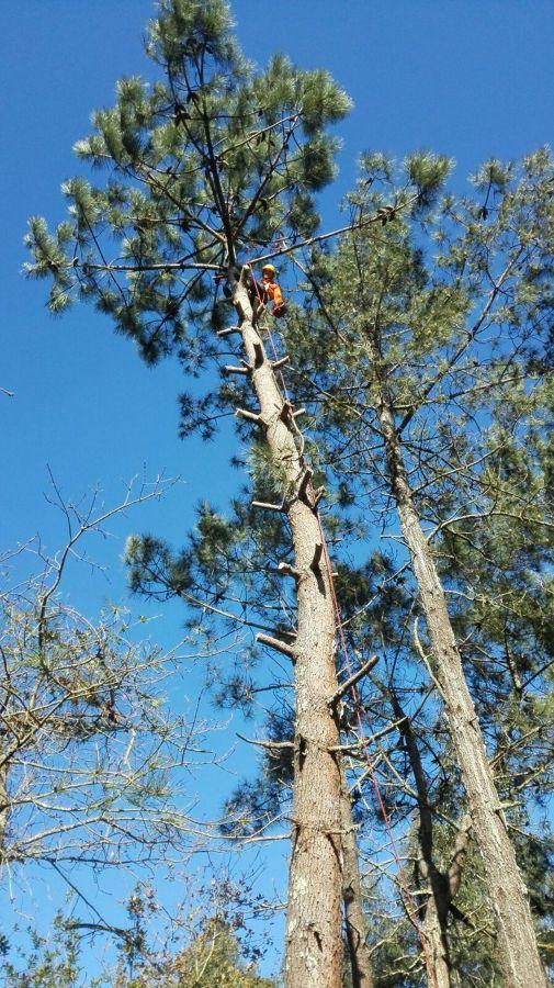 Derrame de ramas controladas