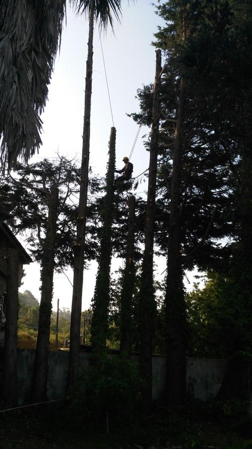 Descenso con arnes para talar ramas