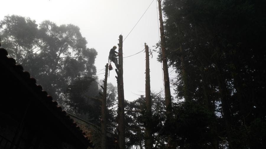Descenso de tronco con sistema de poleas y cabos instalado