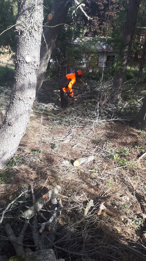 Despejando de ramas el suelo
