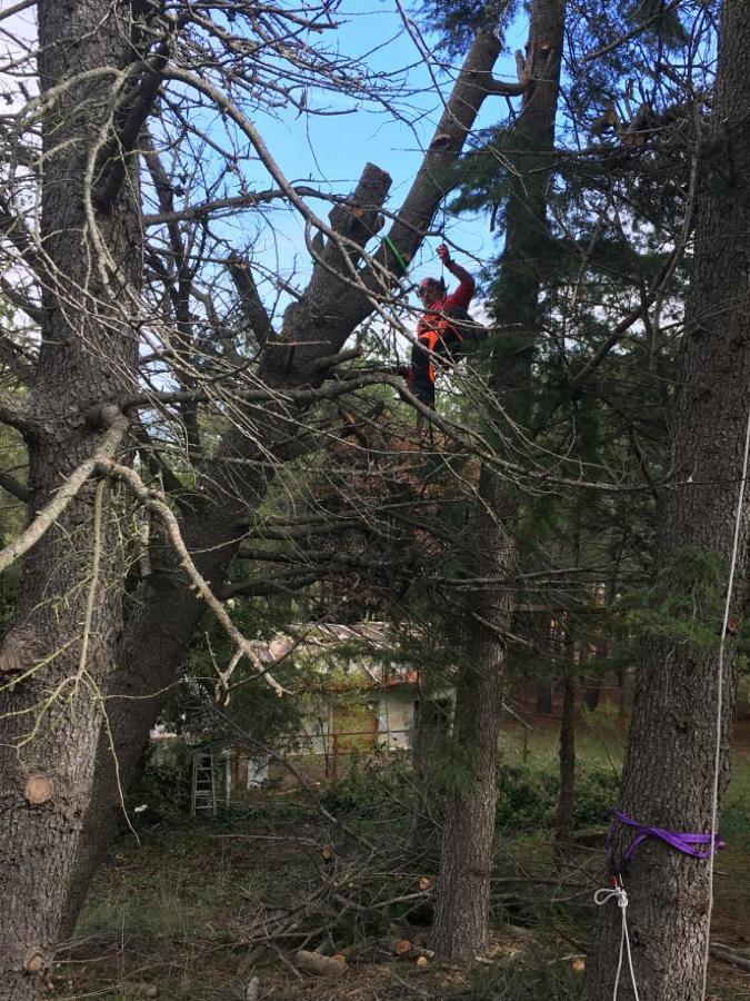 Despejando ramas