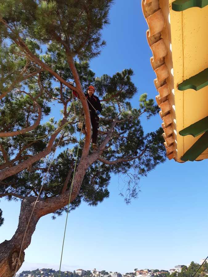 Después de quitar ramas peligrosas