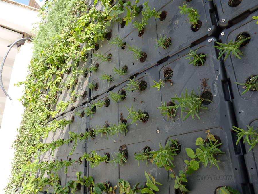 Detalle jardín vertical