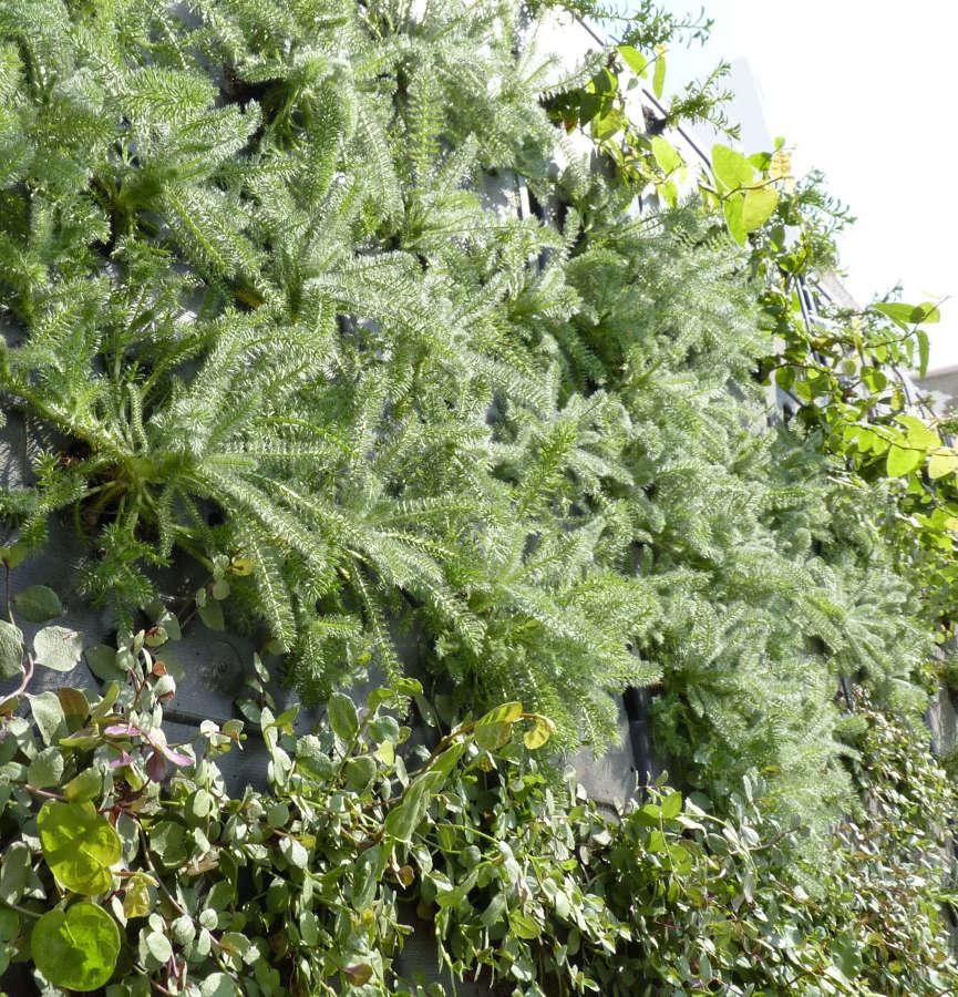Detalle muro verde