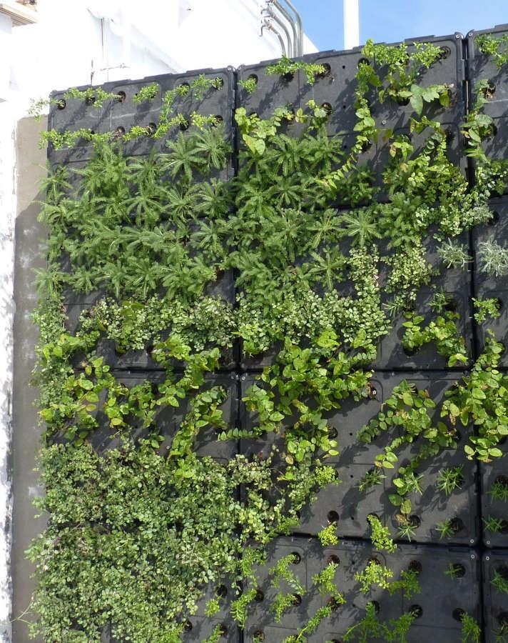 Jard n vertical ideas jardineros - Como hacer un muro verde ...