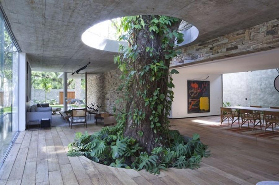 árbol dentro de casa