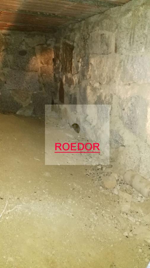 Trabajo de eliminaci n de plaga de ratas en torrelodones - Trabajo en torrelodones ...