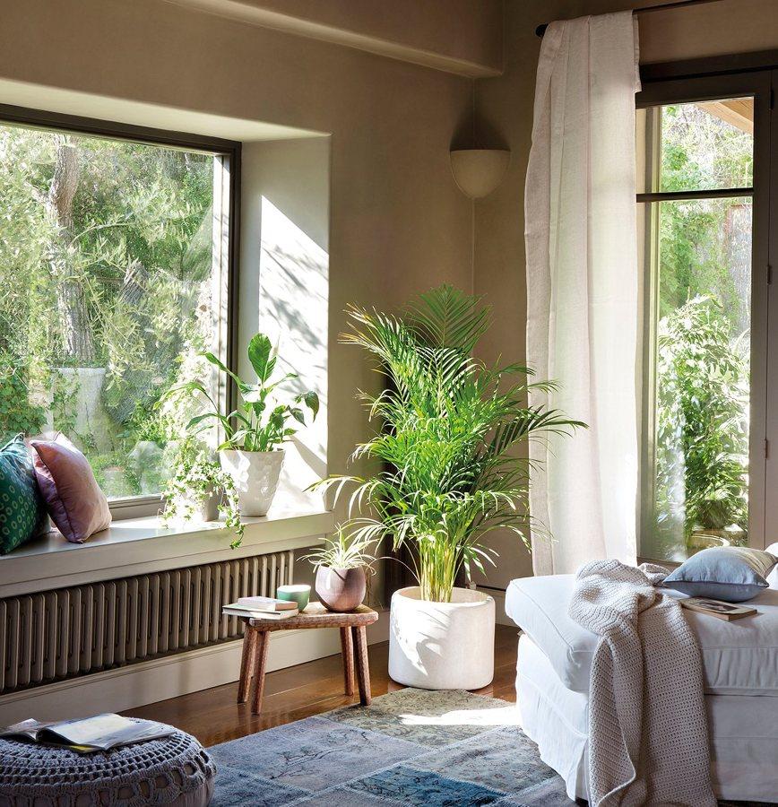 C mo cuidar tus plantas de interior ideas jardineros - Enfermedades de las plantas de interior ...