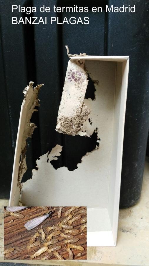 Erradicacion de plaga de termitas ideas control plagas - Acabar con las termitas ...