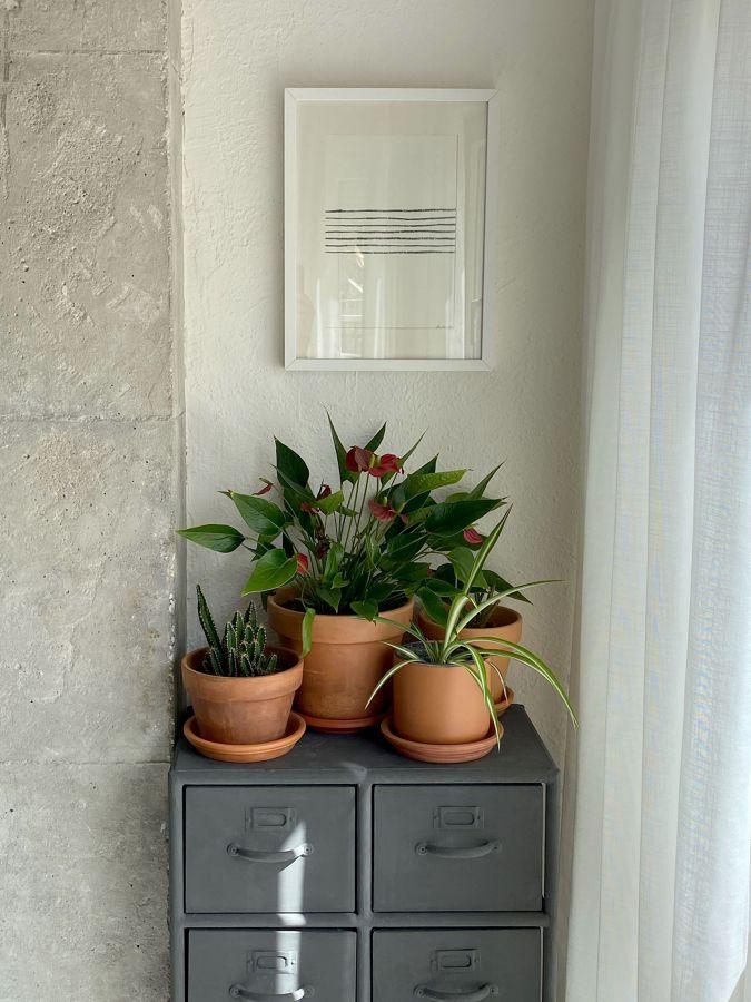Esquina con columna vista y plantas