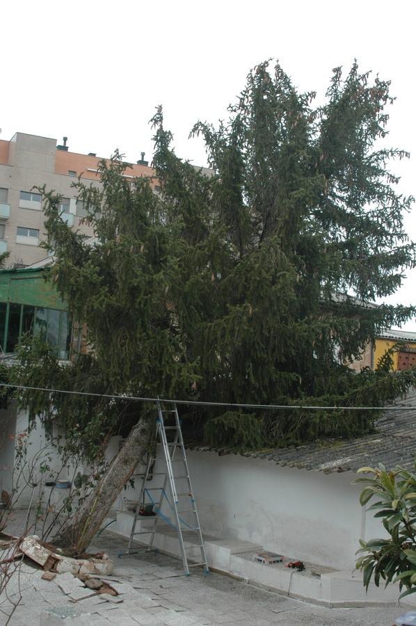 Estado del árbol en el momento de comenzar a ejecutar el trabajo.