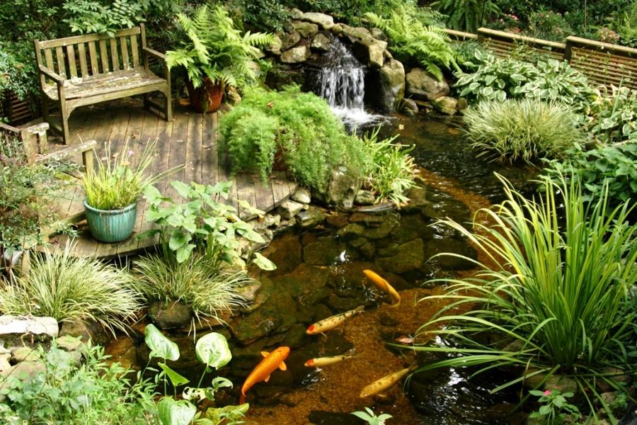 estanque artificial con peces