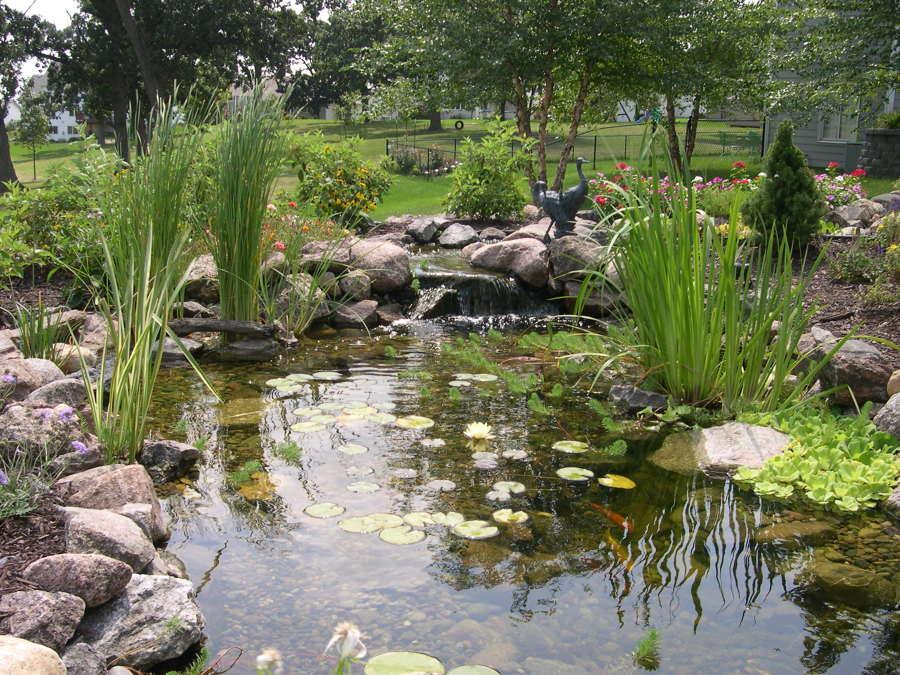 Pensando en construir un estanque descubre todas sus for Garden pool ecosystem