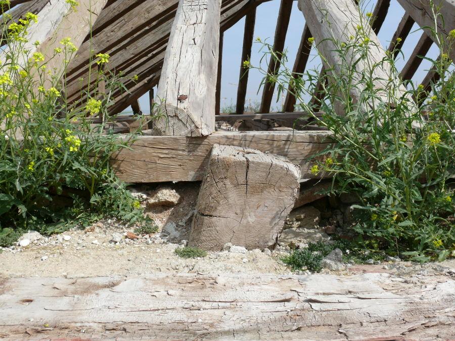 estructura primitiva 7