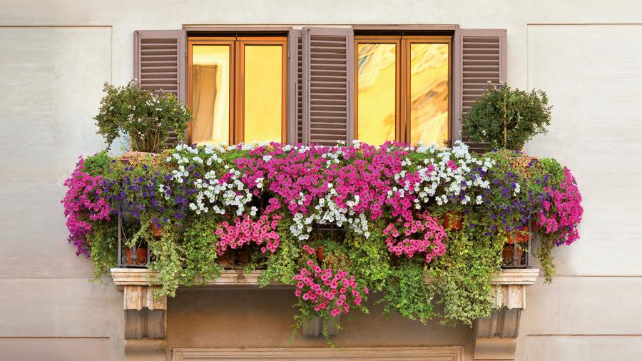 Inunda el exterior de tu casa con flores y plantas ideas for Significado exterior