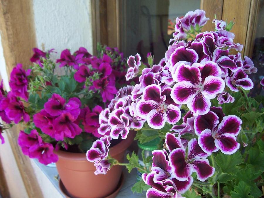 Inunda el exterior de tu casa con flores y plantas ideas - Plantas de exterior con flor ...