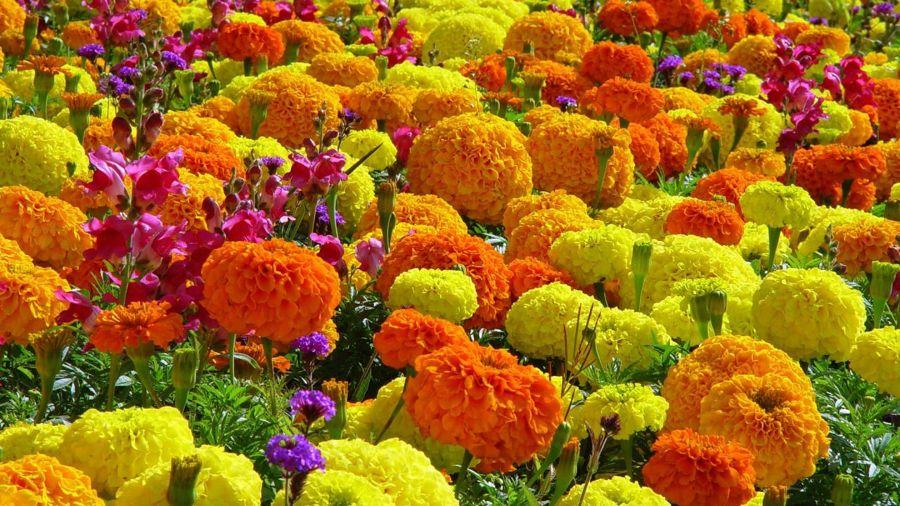 Inunda el exterior de tu casa con flores y plantas ideas decoradores - Hogarutil plantas ...