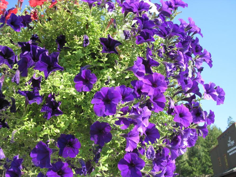 Inunda el exterior de tu casa con flores y plantas ideas - Hogarutil plantas ...