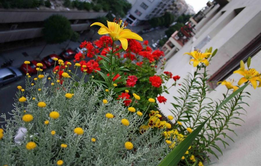 Inunda El Exterior De Tu Casa Con Flores Y Plantas Ideas