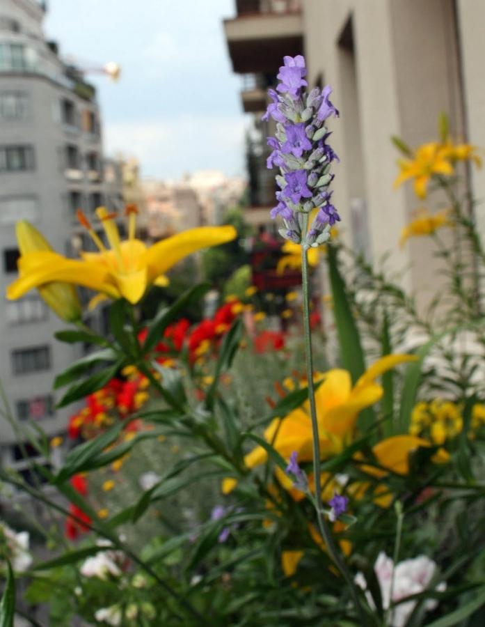 Inunda el exterior de tu casa con flores y plantas ideas - Plantas aromaticas exterior ...