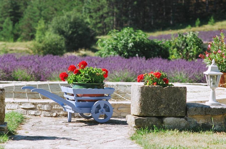 flores antibichos