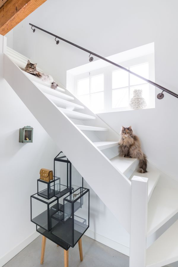 Gatos en una escalera