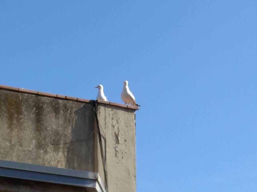 gaviotas en el tejado
