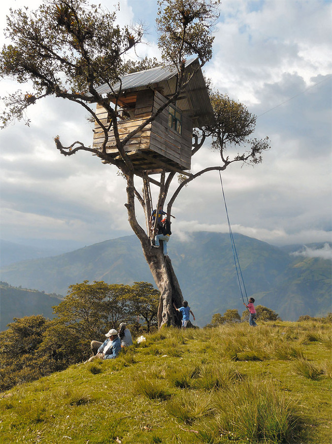 casa en el árbol a mucha altura