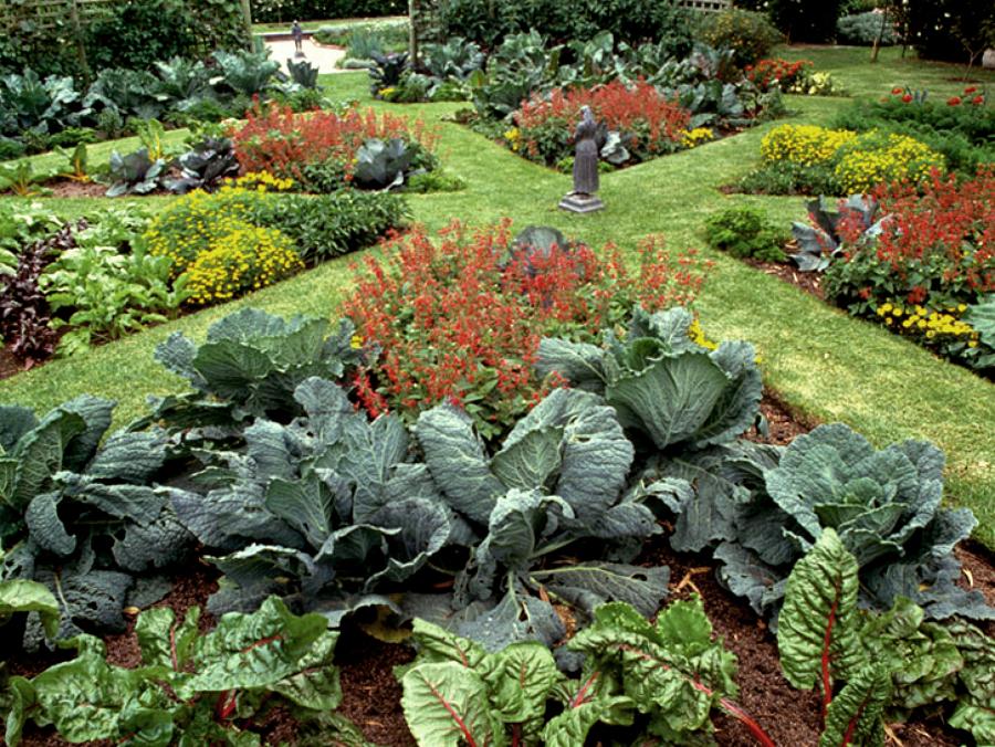 C mo cultivar un huerto en invierno ideas jardineros - Como cultivar un huerto ...