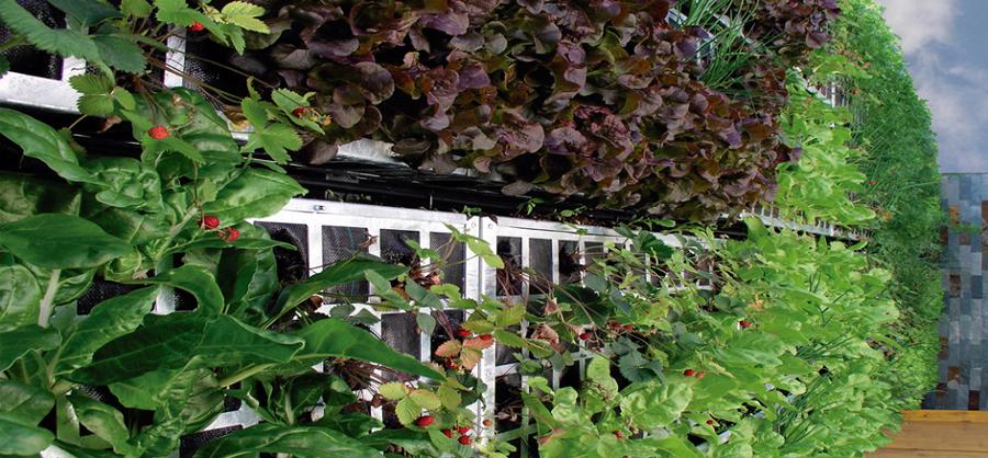 Huerto vertical ideas jardineros for Como se realiza un huerto vertical
