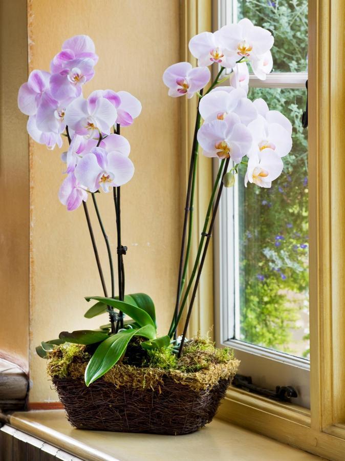 humedad plantas de interior