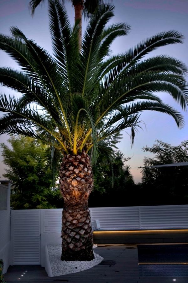 Proyecto de reforma de jard n con piscina ideas decoradores for Iluminacion para palmeras