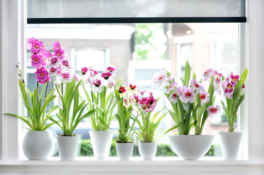Cómo Cuidar Tus Plantas de Interior   Ideas Jardineros