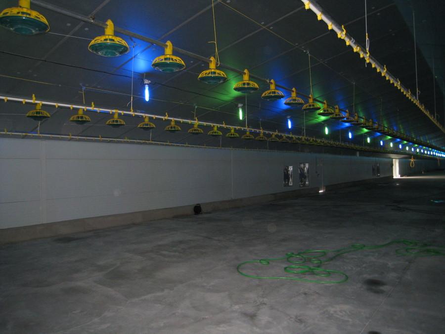 Iluminación y líneas de comederos y bebederos
