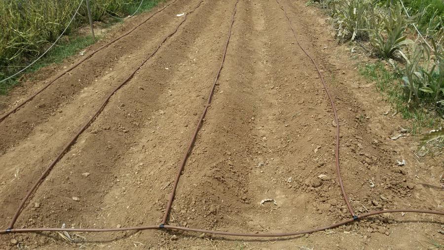 Instalaci n sistema de riego por goteo y mantenimiento de for Instalacion riego jardin
