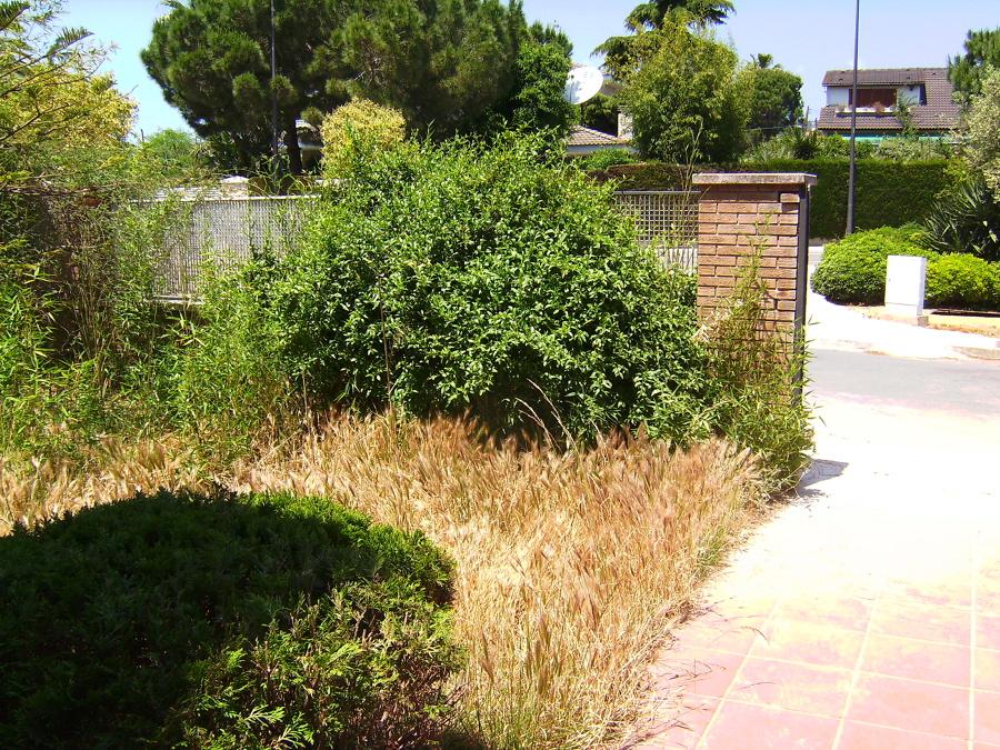 Renovaci n de un jardin abandonado ideas jardineros for Arreglar jardin abandonado