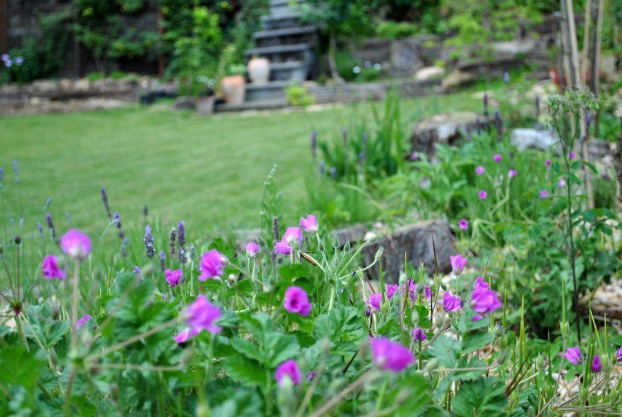Plantas arom ticas que perfumar n tu jard n todo el a o for Arbustos ornamentales para jardin