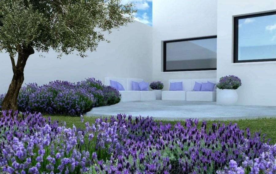 Jardín con lavanda