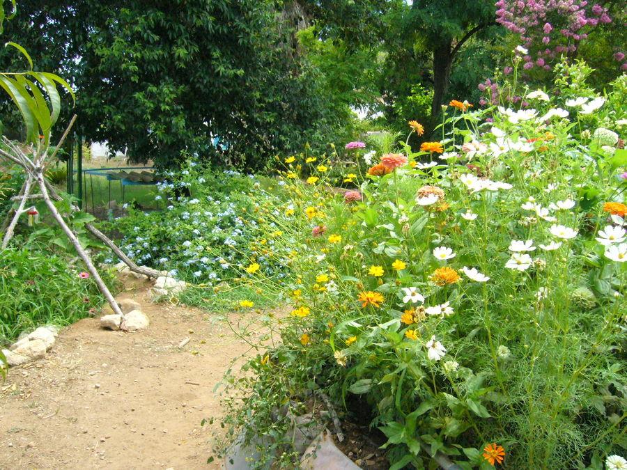 Dise a y crea tu propio jard n ecol gico ideas decoradores for Crea tu jardin