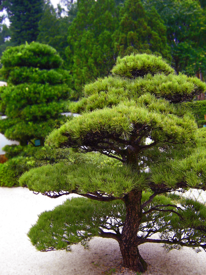 Foto Jardín Japonés de Elenatorrente Díaz #846180  Habitissimo