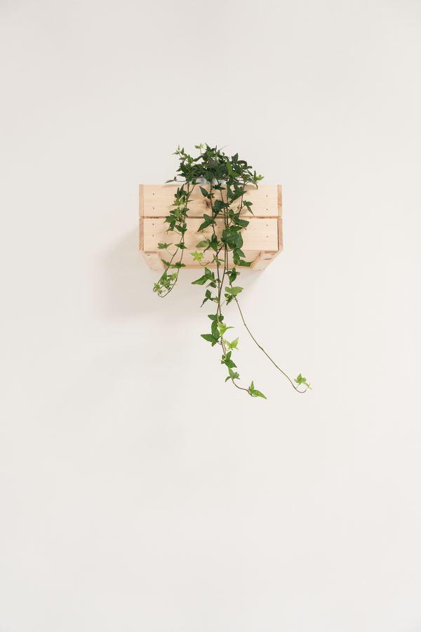 Jardín vertical caja madera