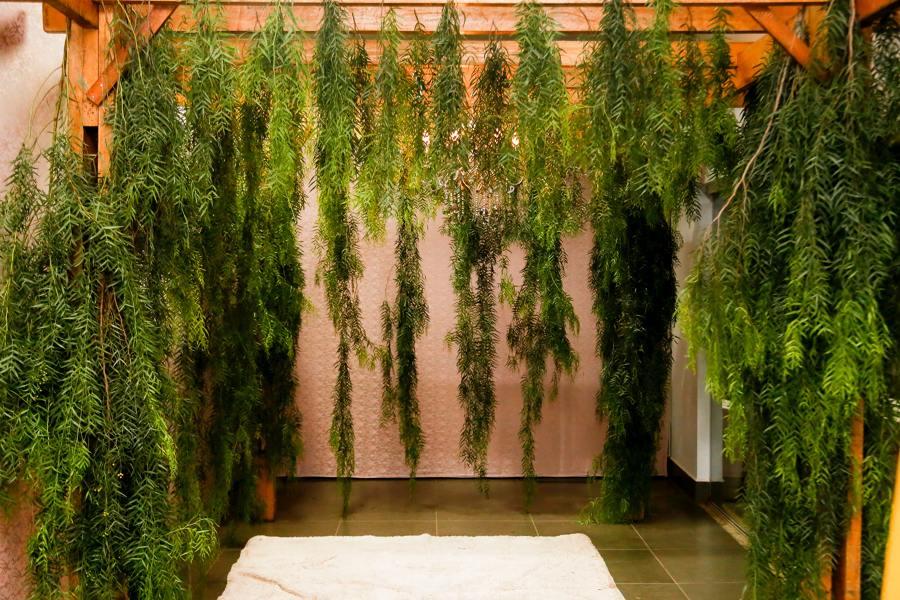 Jardín vertical en pérgola exterior