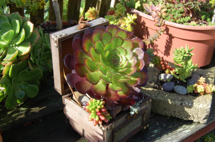 decorar jardín