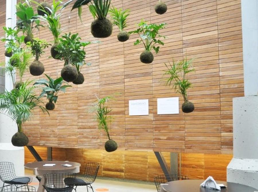 Kokedama tus plantas sin macetas ideas jardineros - Soportes para macetas de interior ...