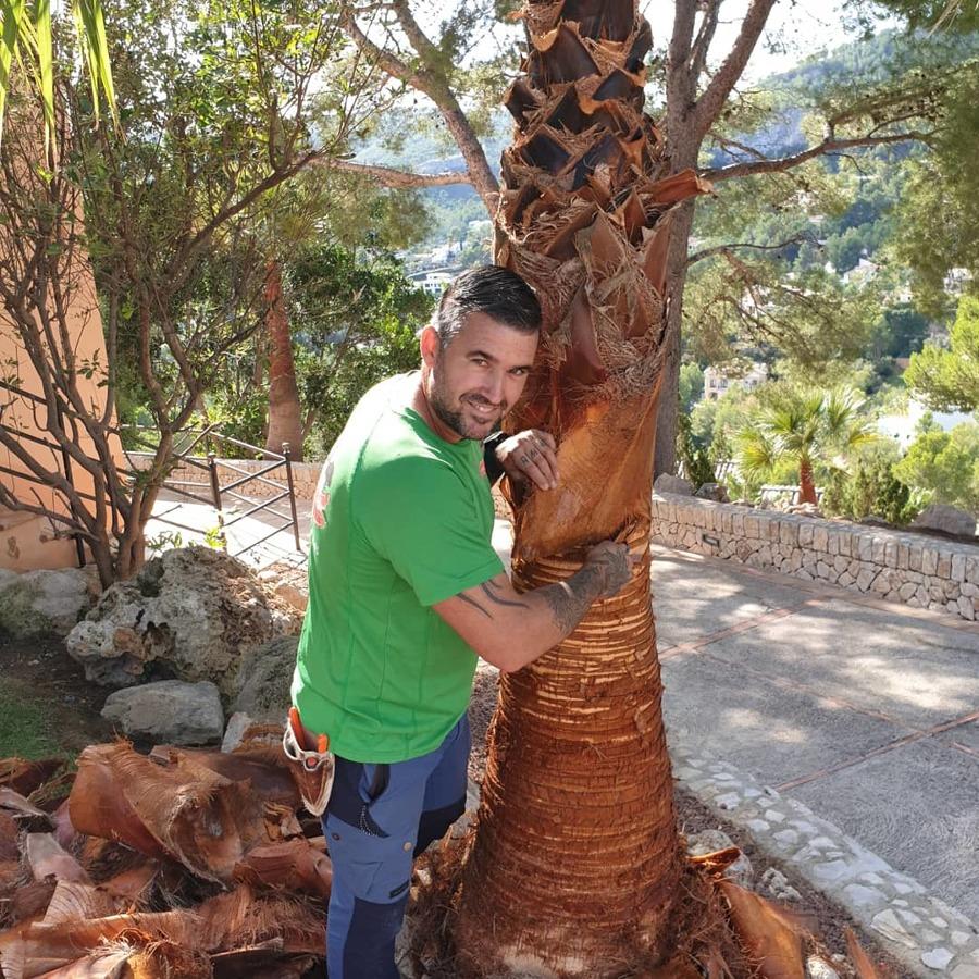 Limpieza de tronco de palmeras
