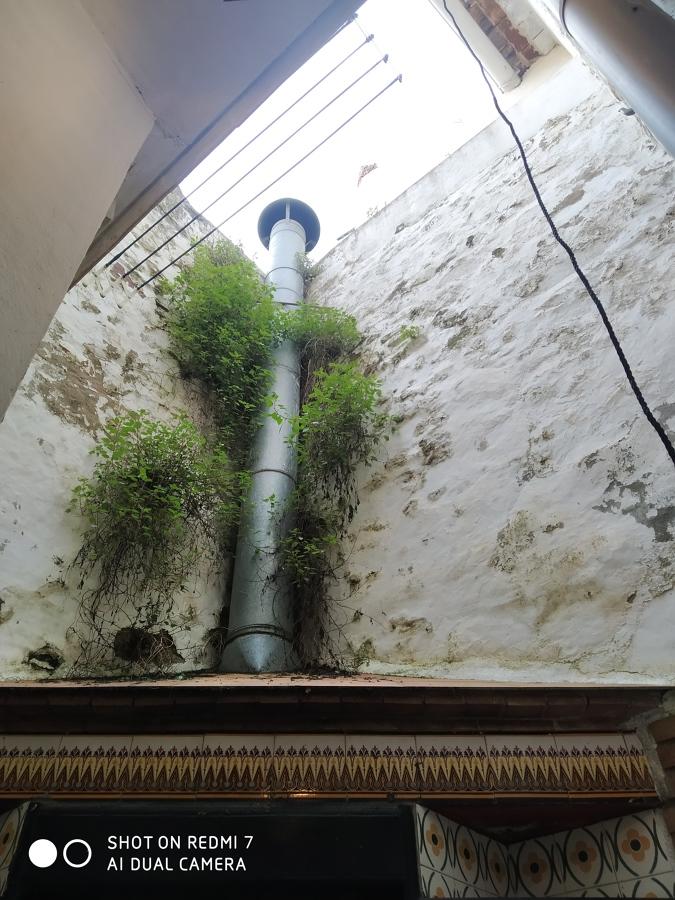 limpieza malas hierbas y reparacion