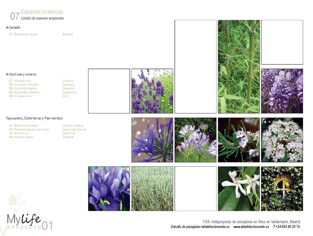 Listado de plantas y flores