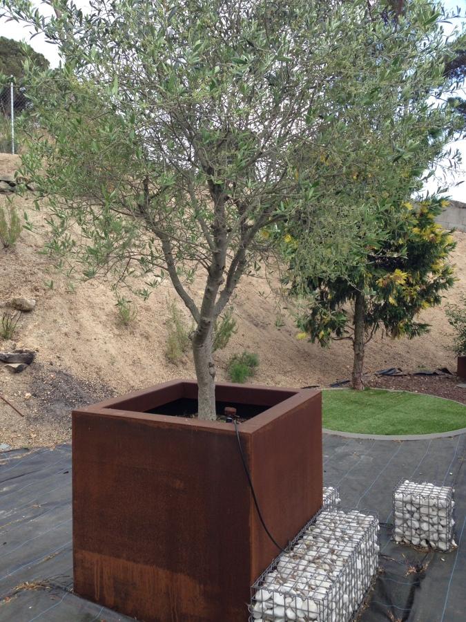 Hacer de tu casa un lugar inolvidable ideas jardineros for Arboles para macetas de exterior