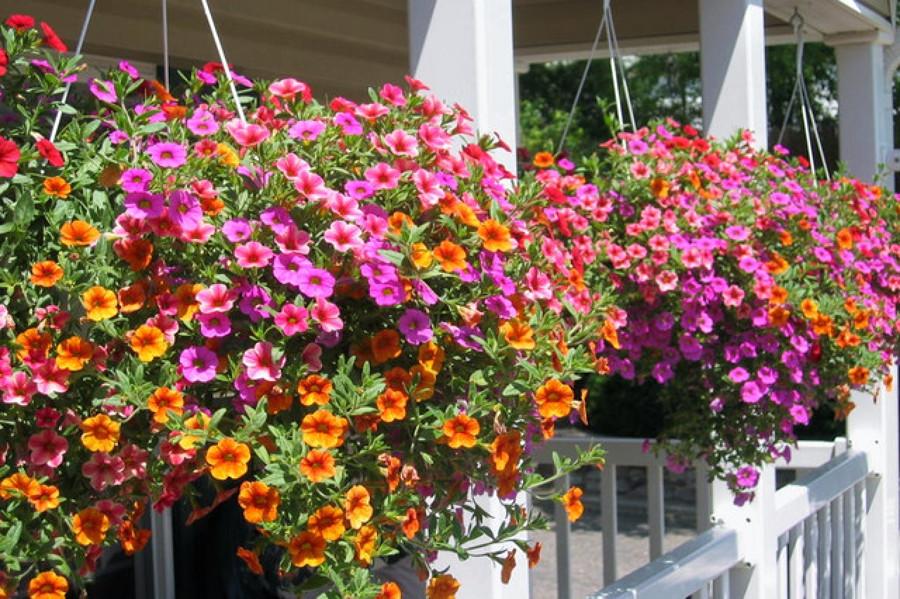 macetas colgantes de flores71